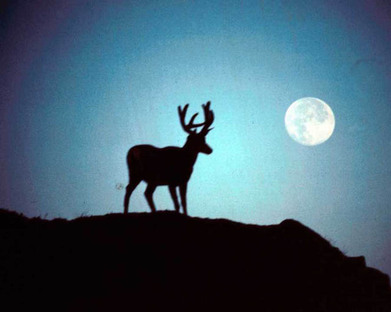 July's Full Buck Moon –  The Witty Witch